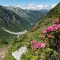 Many flowers along the trail.- Tour Du Mont Blanc: Stages 7 + 8