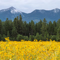 It's rare to see the peaks white-capped in August, but sometimes hail will make it happen.- Fort Valley Flower Field