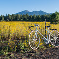 This makes a fun and easy bike ride from town.- Fort Valley Flower Field