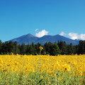 This is an easy stop on the way to Grand Canyon or Arizona Snowbowl.- Fort Valley Flower Field