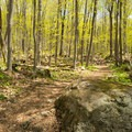 Sun filters through the forest.- Mount Pisgah via South Trail