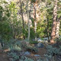 The creek is accessible from the campground.- Fork Campground