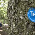 The blue-blazed Dry Brook Ridge Trail.- Graham Mountain