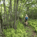 Cutting east on the unmarked Graham Mountain Trail.- Graham Mountain