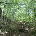 The former Old Tappan Road.- Graham Mountain
