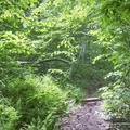 Heading back down the narrow path.- Graham Mountain