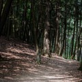 The trail is clearly marked with yellow squares lining the way.- Van Campens Glen Hike