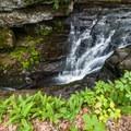 Van Campens Falls.- Van Campens Glen Hike