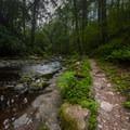 The trail alongside Van Campens Creek near Van Campens Falls.- Van Campens Glen Hike