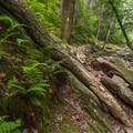 Mossy rocks and ferns line the banks of the river and most of the trail.- Van Campens Glen Hike