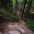 The final leg of the trail takes you down into a small glen before you reach Van Campens Falls.- Van Campens Glen Hike