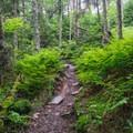 A gentle grade heading up Mount Starr King.- Mount Starr King + Mount Waumbek