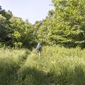 The trail continues through tall grasses.- Bearpen Mountain
