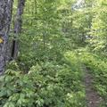 The trekker's shortcut through the woods.- Bearpen Mountain