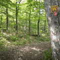 The trail rejoins with the S-72 path.- Bearpen Mountain