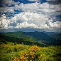 You'll find flame azaleas, rhododendrons, and the rare Gray's lily blooming in June and early July.- Carvers Gap to Grassy Ridge Bald