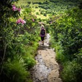 Get lost in the rhododendrons! Roan Mountain is also home to the world's largest natural rhododendron garden!- Carvers Gap to Grassy Ridge Bald