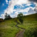 The Appalachian Trail.- Carvers Gap to Grassy Ridge Bald