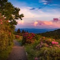 One of the best times to be on trail between Carvers Gap and Grassy Ridge is sunset. From every angle the mountains become covered in the perfect glow of color.- Carvers Gap to Grassy Ridge Bald