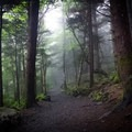 Just after leaving Carvers Gap you'll pass through a mysterious forest that you'll swear is straight out of a storybook!- Carvers Gap to Grassy Ridge Bald