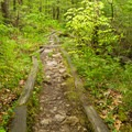 The trail starts out with an easy grade.- Mount Chocorua via Liberty Trail