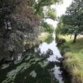 The Avon River. - Hagley Park + Botanic Gardens