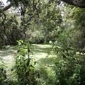 Hagley Park.- Hagley Park + Botanic Gardens