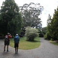 Visitors observing a eucalyptus tree.- Hagley Park + Botanic Gardens