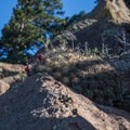 Watch where you reach because cactuses abound.- Mount Elden Slabs