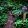 The trail to Margarette Falls.- Margarette Falls
