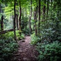 The trail is beautiful year round. In the summer it is lush, green, and shaded, the perfect spot for escaping the summer sun.- Margarette Falls