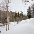 An aspen grove near the saddle.- Mount Olympus Snowshoe
