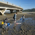 Clammers under the Alsea Bay Bridge.- Alsea Bay Clamming