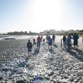 Clammers on the mud flats of Alsea Bay at low tide.- Alsea Bay Clamming