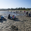 Clammers in Waldport's Alsea Bay.- Alsea Bay Clamming