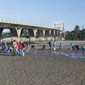 Clammers under the Alsea Bay Bridge.- Alsea Bay Clamming