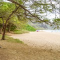 The back of the beach is shaded by many trees.- Makua Beach