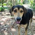 The local resort dogs are very friendly.- Mopan River: Clarissa Falls