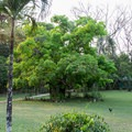 A nice green space to relax after swimming.- Mopan River: Clarissa Falls