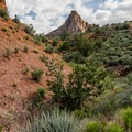 This distant view of the Watchman goes away for the first part of the hike.- Watchman Trail