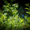The indigo bunting is one of the most vibrant native birds that you may see on your adventure throughout the park.- Seven Islands State Birding Park
