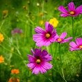 In the summer months, the meadows explode with color from numerous wildflowers blooming.- Seven Islands State Birding Park