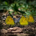 Butterflies fill the park in the warmer months.- Seven Islands State Birding Park