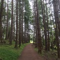 The trail begins in a thick forest.- San Juan Island: Young Hill