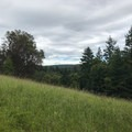 The trail soon opens up to a small meadow.- San Juan Island: Young Hill
