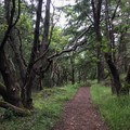 The trail then climbs and switches back through the forest.- San Juan Island: Young Hill