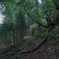 Moss covered limbs drape the trail.- San Juan Island: Young Hill