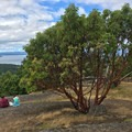 Hikers sit near a Madrona Tree on top of Young Hill.- San Juan Island: Young Hill