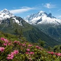 Alpenrose blooming along the trail.- Tour Du Mont Blanc: Stages 9, 10 + 11
