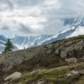 Ibex along the balcony trail.- Tour Du Mont Blanc: Stages 9, 10 + 11